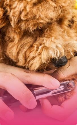 Dog Nail Clipping Service in Spokane, WA